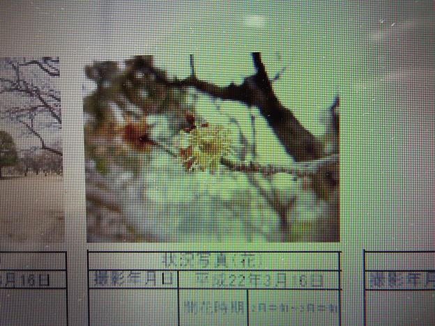 酈懸梅TA7-033 1703050038