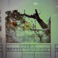 Photos: 酈懸梅TA7-033 1703050038