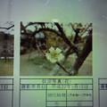 Photos: 酈懸梅梅A-075 1703050040