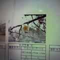 Photos: 酈懸梅梅A-101 1703050042