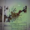 Photos: 酈懸梅梅A-113 1703050044