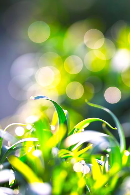 Photos: 暖かな春の光!