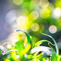 暖かな春の光!