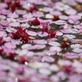 写真: 散花