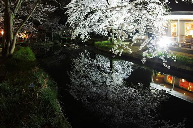 Photos: 夜な夜なショット