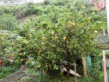 160519-21レモン
