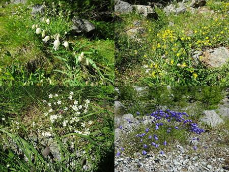 160716-09花々