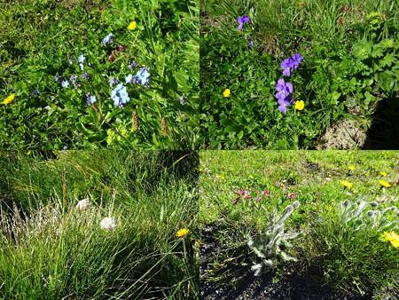 160720-05花々4