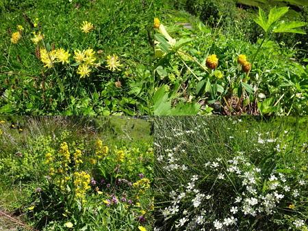 160720-12花々9