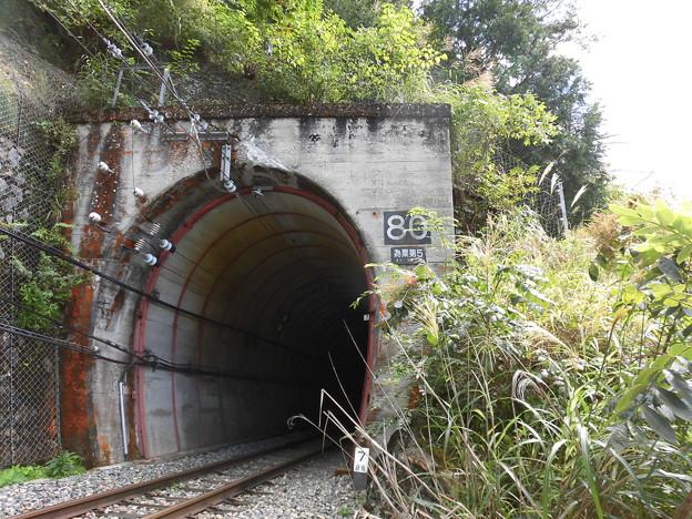 為栗のトンネル
