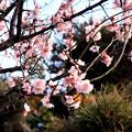 Photos: こんなに咲いている