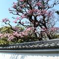 桜か梅か???