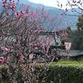 写真: 梅園~山と本堂が見える