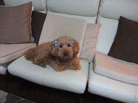 母の犬「ハッピー」