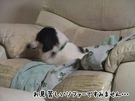 お、キット君いつの間にソファーに!