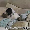 Photos: お、キット君いつの間にソファーに!