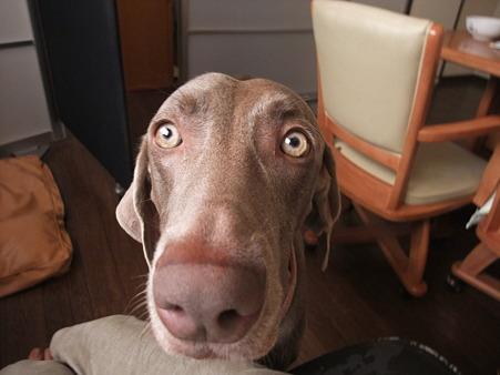 猫の目のように明るいと黒目が小さくなる