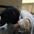 Photos: 元気な犬達・・・