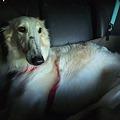 Photos: 寂しそうな哀愁漂う犬