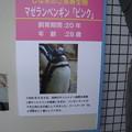 Photos: しながわ水族館にて