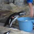 Photos: すごい勢いで餌をねだるピンキ