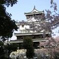 岩国城の春