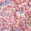 春あふれる