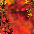 Photos: Frame of Autumn