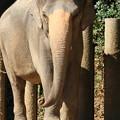 Photos: 象だゾウ