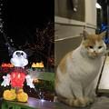 写真: 猫とネズミ