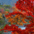 Photos: 小雨模様の観音沼森林公園