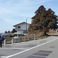 0312比叡山8一本杉1