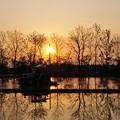 夕陽を享ける田圃