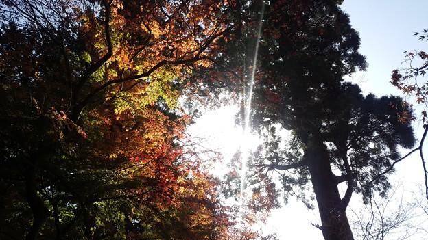 写真: 鎌倉の紅葉