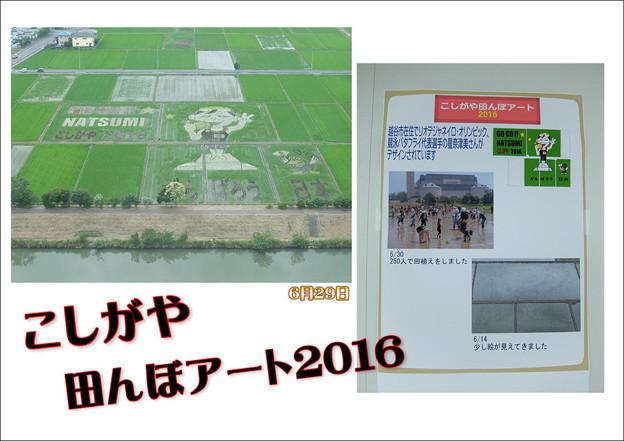 Photos: 田んぼアート
