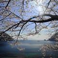 『常神半島・常神の海桜』