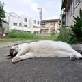 Photos: 眠る・・
