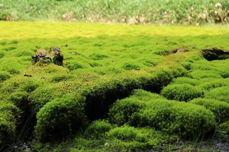 笹倉湿原 (4)