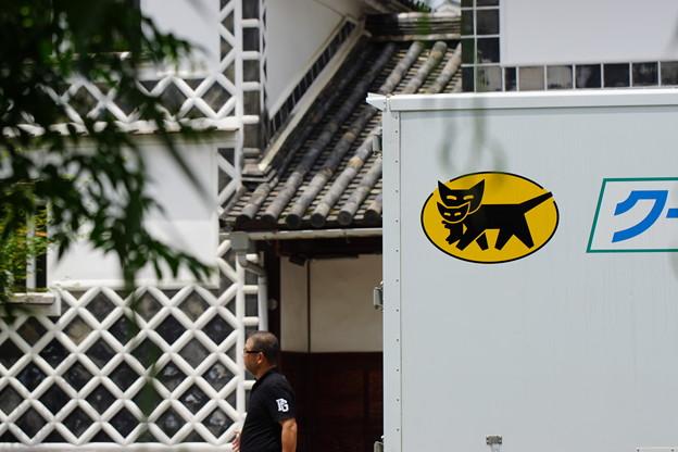 Photos: 倉敷のネコ