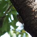 Photos: 公園の蝉