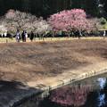 写真: 岡山後楽園梅林
