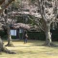 後楽園桜林