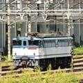 Photos: EF65 2097号機 宇都宮貨物(タ)にて休息中