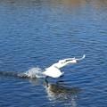 川面を翔る