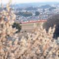 写真: 満開の梅と赤い特急