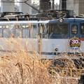 EF65 2067「JR貨物30周年」HM付