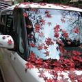 写真: 紅葉散る2-車