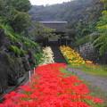 rs-160924_10_参道から山門を・SH(西方寺) (23)