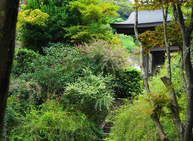 rs1-160926_73_山門付近の萩です・SH(海蔵寺) (8)
