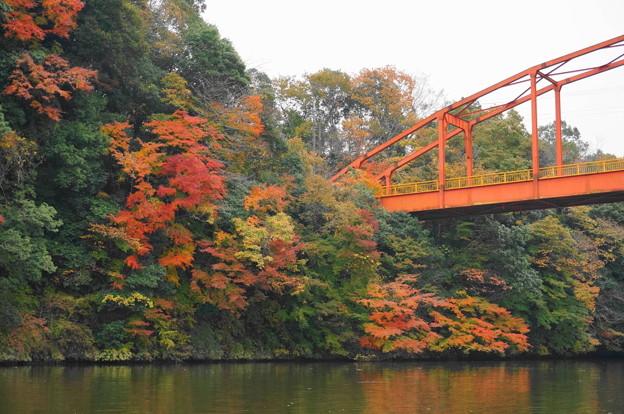 rs-161127_21_亀山湖の紅葉・SH(亀山湖クルーズ) (15)